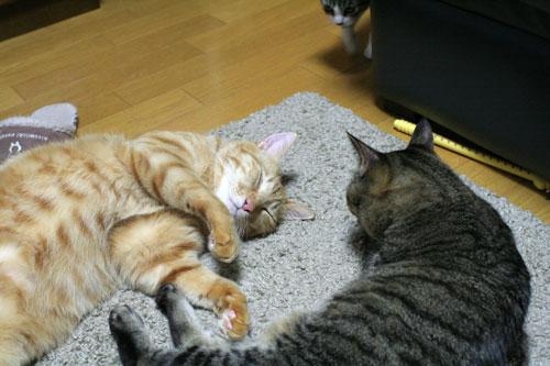 好かれる子猫_d0355333_17031943.jpg