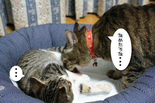 好かれる子猫_d0355333_17031971.jpg