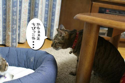 好かれる子猫_d0355333_17031994.jpg