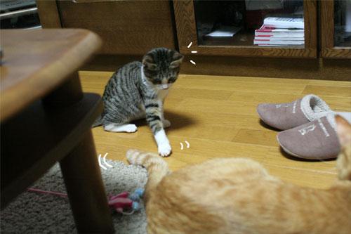 好かれる子猫_d0355333_17031999.jpg