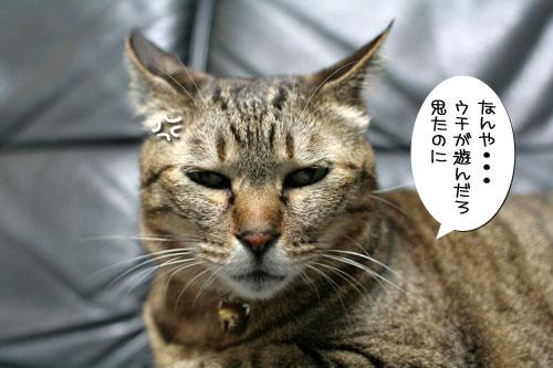 好かれる子猫_d0355333_17032001.jpg