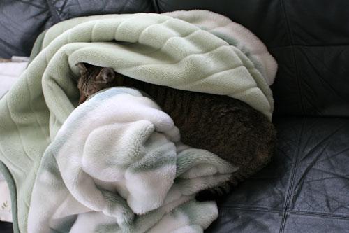 毛布を移動したいのだけど_d0355333_17034258.jpg