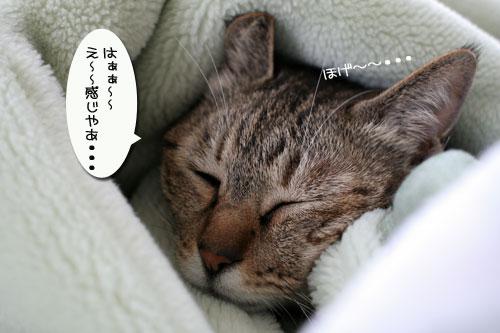毛布を移動したいのだけど_d0355333_17034372.jpg