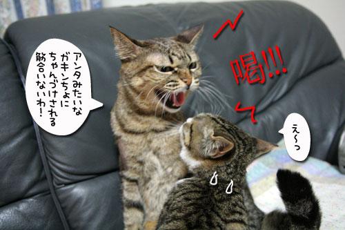 猫の世界も礼儀正しく?_d0355333_17040266.jpg