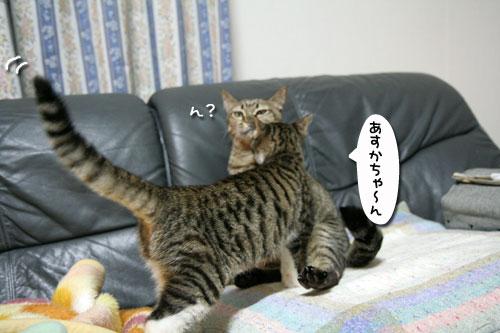 猫の世界も礼儀正しく?_d0355333_17040283.jpg