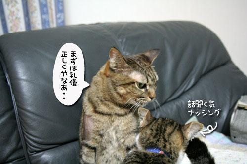 猫の世界も礼儀正しく?_d0355333_17040326.jpg