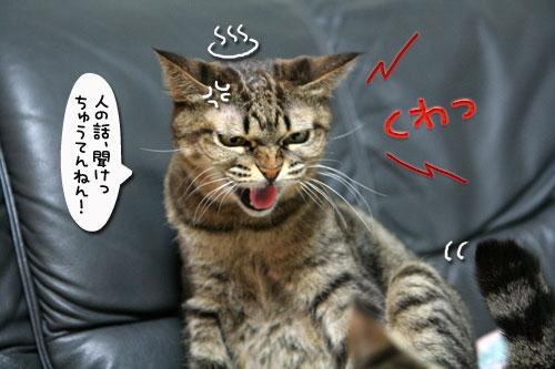 猫の世界も礼儀正しく?_d0355333_17040332.jpg