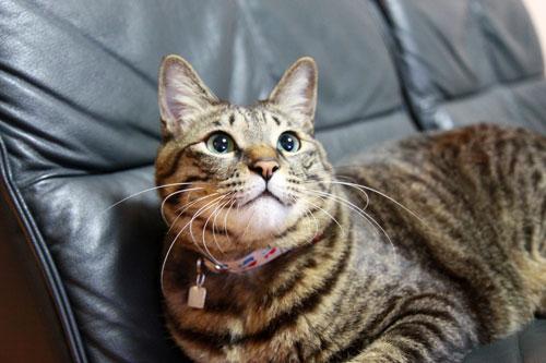 永遠の子猫とらちゃん_d0355333_17040812.jpg