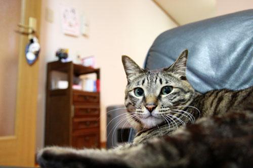 永遠の子猫とらちゃん_d0355333_17040869.jpg