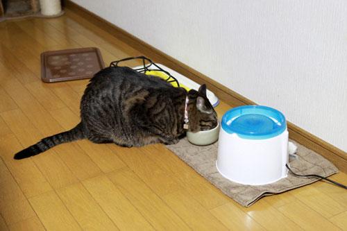 永遠の子猫とらちゃん_d0355333_17040875.jpg