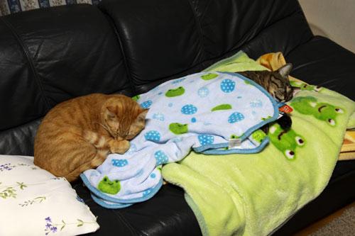 永遠の子猫とらちゃん_d0355333_17040980.jpg