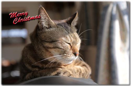 クリスマスの夜に・・・_d0355333_17043807.jpg