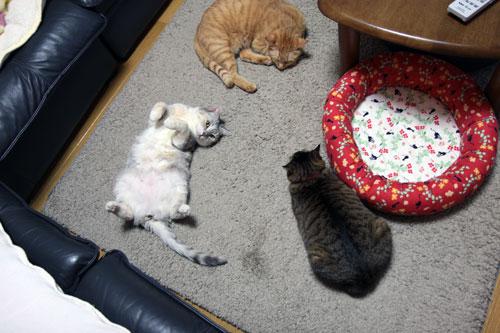 猫の集会_d0355333_18552654.jpg