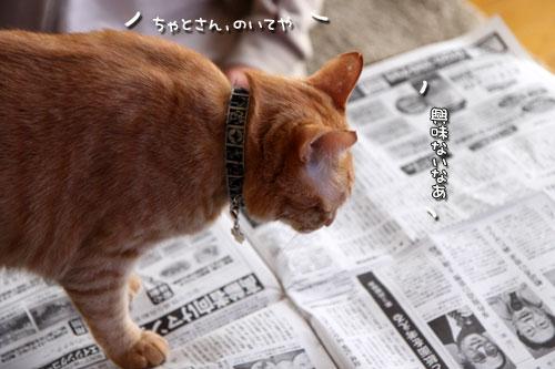 朝刊攻防戦_d0355333_19015740.jpg