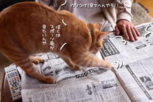 朝刊攻防戦_d0355333_19015775.jpg