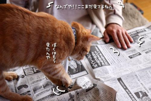 朝刊攻防戦_d0355333_19015799.jpg