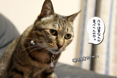 動画★猫草バトル_d0355333_19024127.jpg