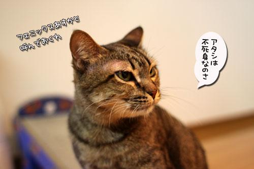 デキるアタシのリングネーム_d0355333_19031767.jpg