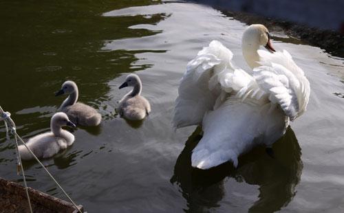 白鳥の湖の罠_d0355333_19032098.jpg