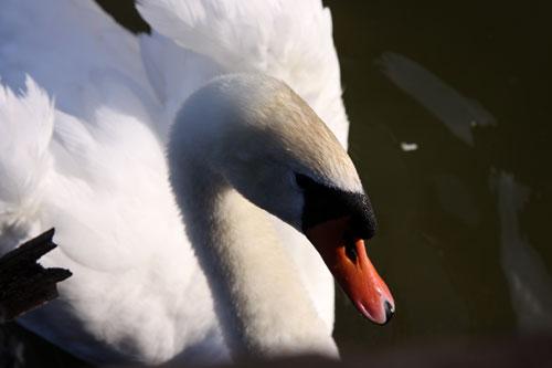 白鳥の湖の罠_d0355333_19032485.jpg