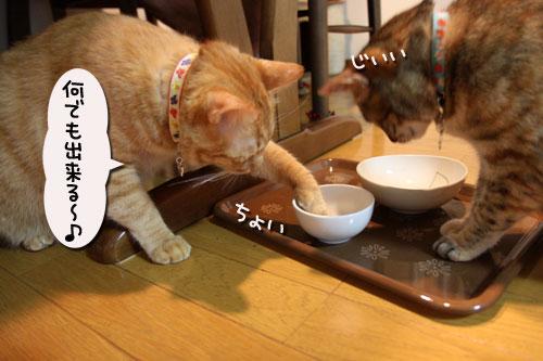 猫の手貸します、有料で_d0355333_19040341.jpg