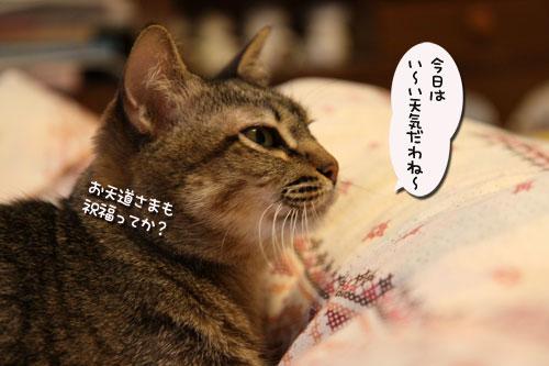 暴風雨の夕方に★前編_d0355333_19044122.jpg