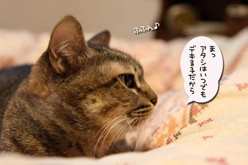 暴風雨の夕方に★前編_d0355333_19044171.jpg
