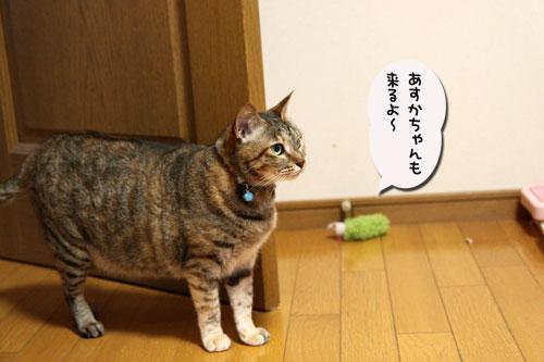暴風雨の夕方に★後編_d0355333_19044600.jpg