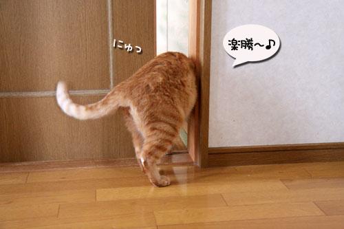 ちゃとらんと引き戸★猫動画_d0355333_19045132.jpg