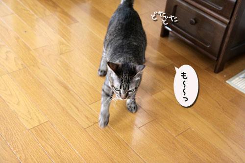 ちゃとらんと引き戸★猫動画_d0355333_19045257.jpg