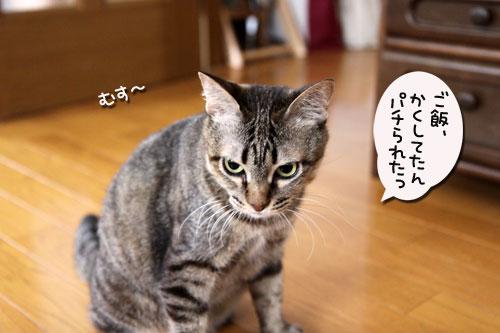 ちゃとらんと引き戸★猫動画_d0355333_19045279.jpg