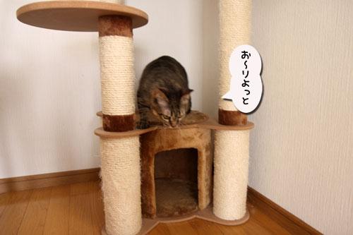 能ある猫は・・・_d0355333_19051462.jpg