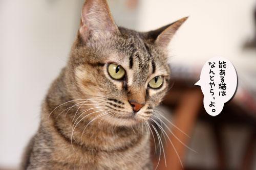 能ある猫は・・・_d0355333_19051506.jpg
