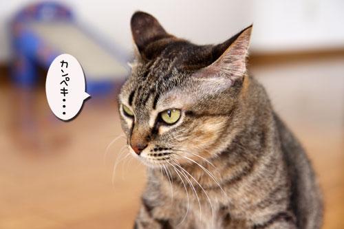 能ある猫は・・・_d0355333_19051571.jpg
