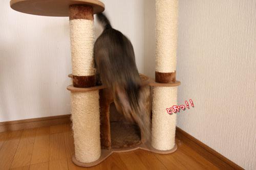 能ある猫は・・・_d0355333_19051588.jpg
