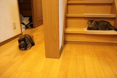 階段滑り止めマットの新しい使い方_d0355333_19052142.jpg