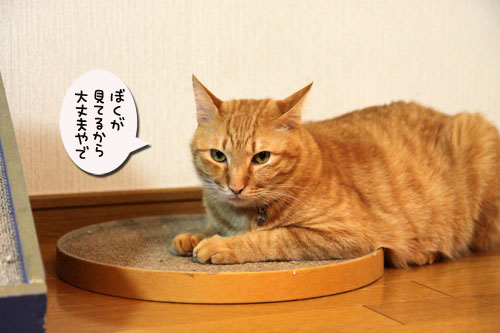 いよいよ北海道へ_d0355333_19053183.jpg
