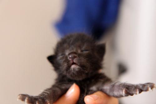 米袋から赤ちゃん猫が_d0355333_19062234.jpg
