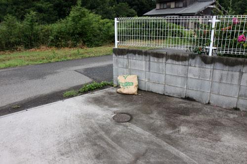 米袋から赤ちゃん猫が_d0355333_19062278.jpg