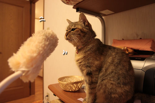 大きな猫じゃらしで_d0355333_19063119.jpg