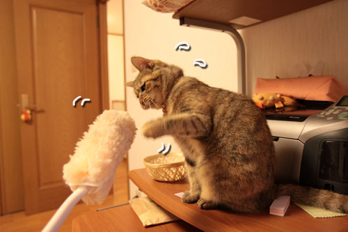 大きな猫じゃらしで_d0355333_19063152.jpg