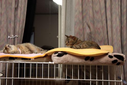 大きな猫じゃらしで_d0355333_19063172.jpg