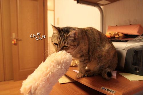 大きな猫じゃらしで_d0355333_19063183.jpg