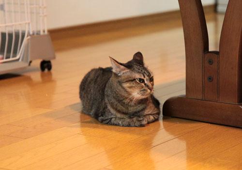 大きな猫じゃらしで_d0355333_19063297.jpg