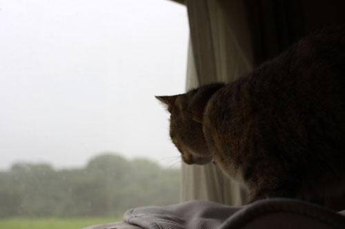早朝の雷雨、その時、にゃんずは!_d0355333_19065361.jpg
