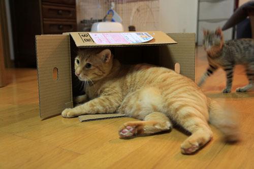 箱も有効利用。_d0355333_19071786.jpg