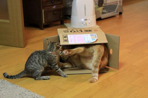 箱も有効利用。_d0355333_19071787.jpg