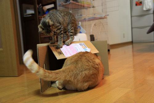 箱も有効利用。_d0355333_19071800.jpg