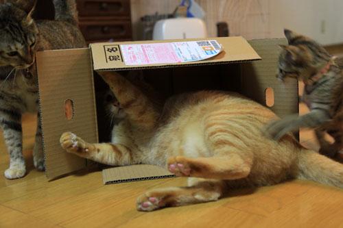 箱も有効利用。_d0355333_19071865.jpg