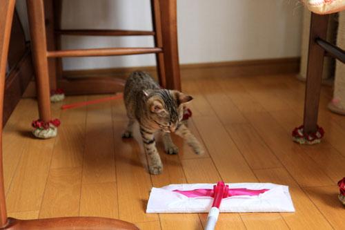 モップと闘う猫_d0355333_19072156.jpg